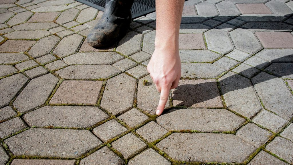 Moss growth between paver joints that could have been avoided by using polymeric sand